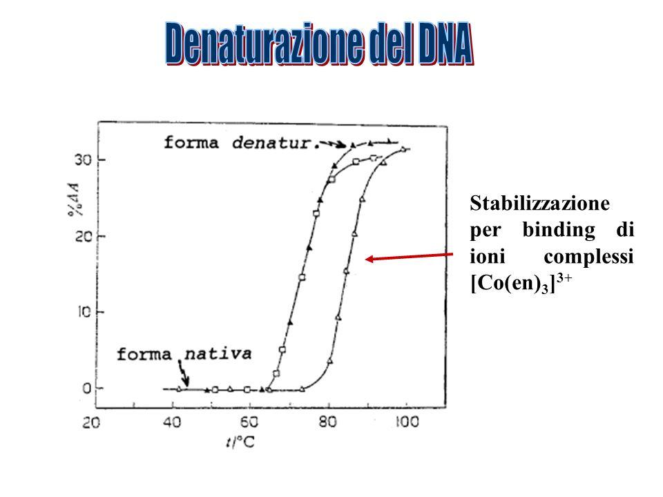 Denaturazione del DNA Stabilizzazione per binding di ioni complessi [Co(en)3]3+